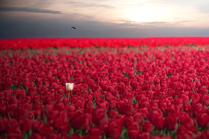 20 фото неймовірної природної краси
